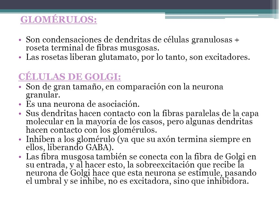 Células de Golgi: Glomérulos: