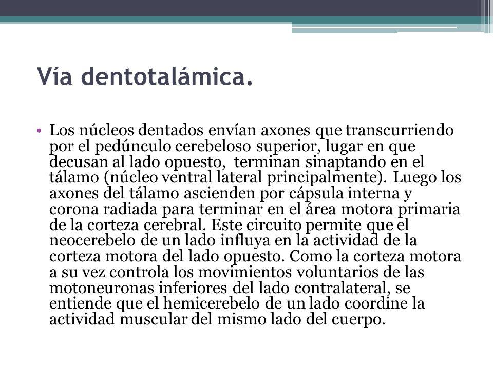 Vía dentotalámica.