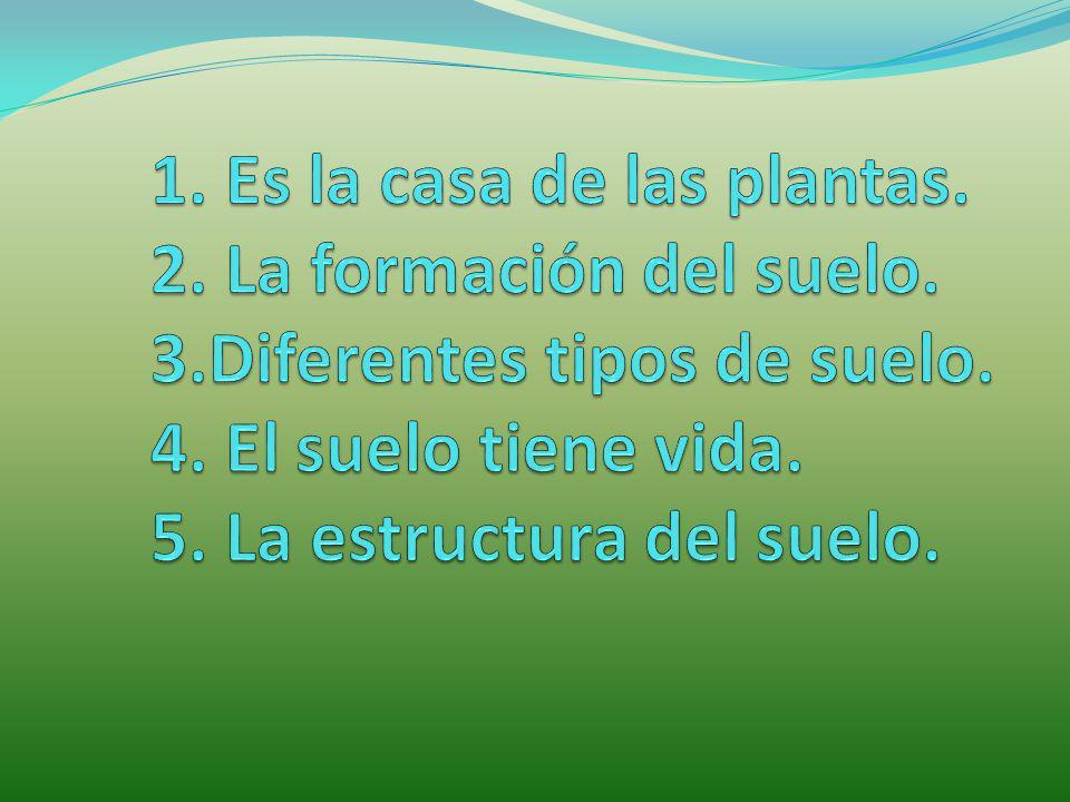 1. Es la casa de las plantas. 2. La formación del suelo. 3