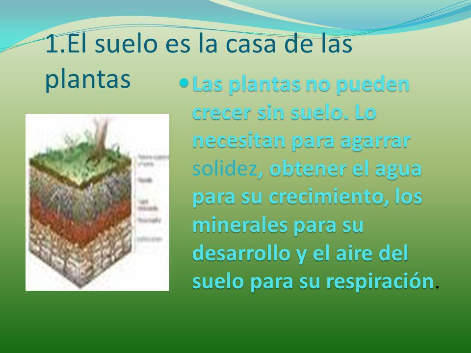 1.El suelo es la casa de las plantas