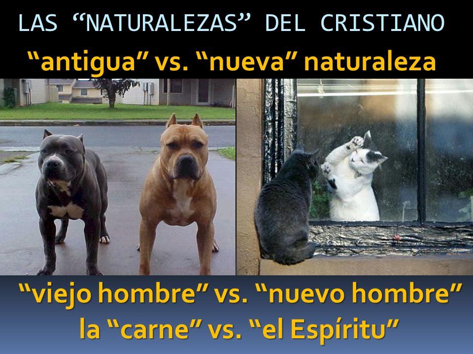 antigua vs. nueva naturaleza
