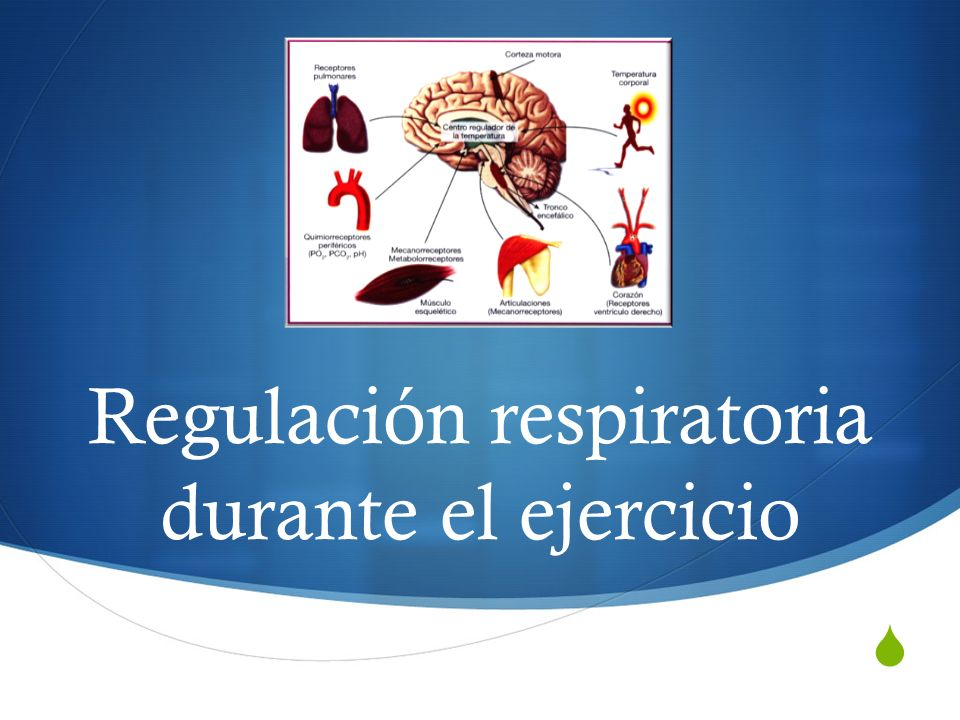 Regulación respiratoria durante el ejercicio