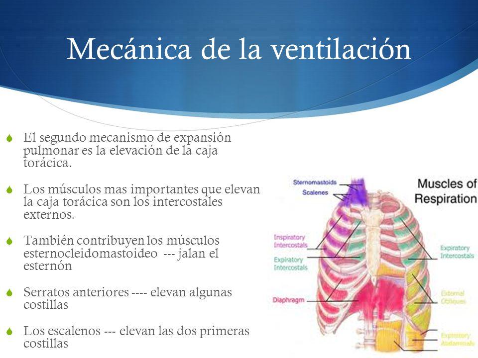 Mecánica de la ventilación