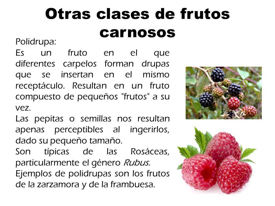 Otras clases de frutos carnosos