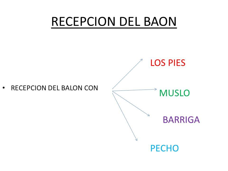 RECEPCION DEL BAON LOS PIES MUSLO BARRIGA PECHO