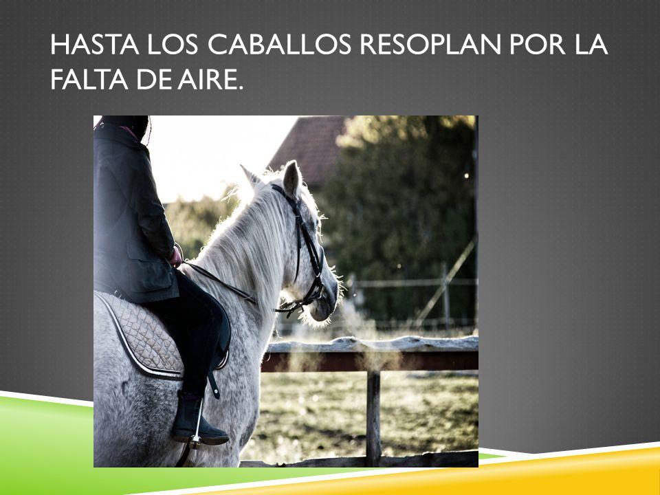 Hasta los caballos resoplan por la falta de aire.