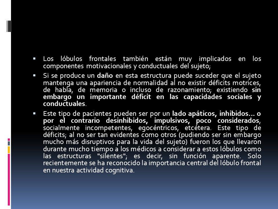 Los lóbulos frontales también están muy implicados en los componentes motivacionales y conductuales del sujeto;