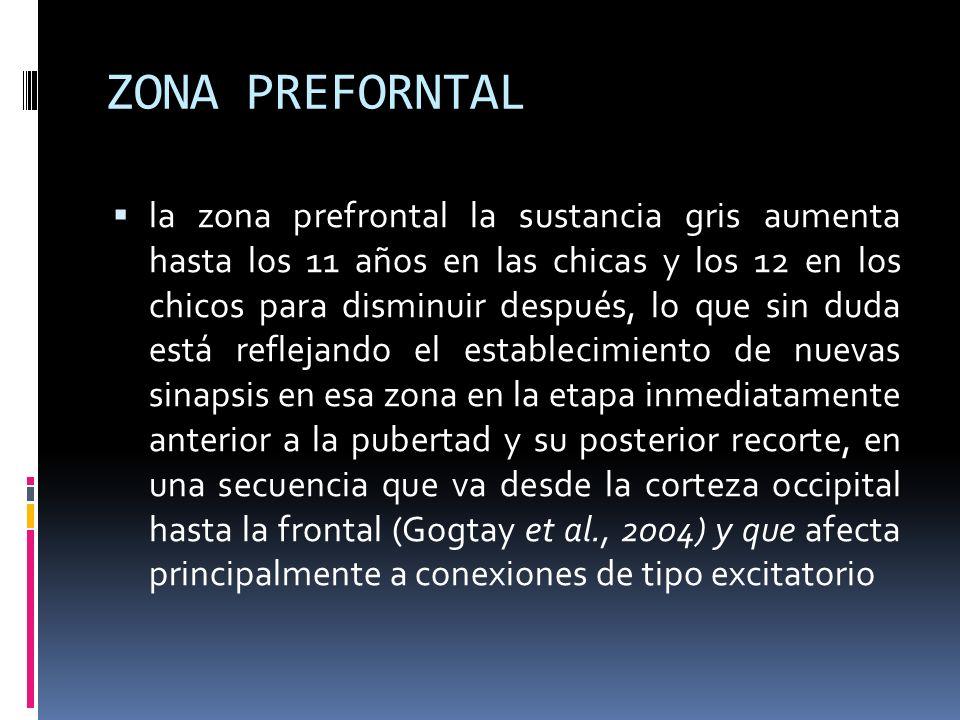 ZONA PREFORNTAL