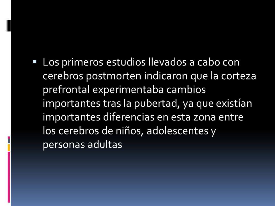 Los primeros estudios llevados a cabo con cerebros postmorten indicaron que la corteza prefrontal experimentaba cambios importantes tras la pubertad, ya que existían importantes diferencias en esta zona entre los cerebros de niños, adolescentes y personas adultas
