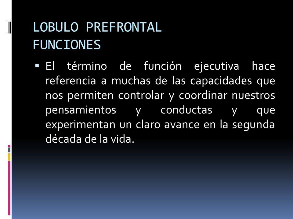 LOBULO PREFRONTAL FUNCIONES