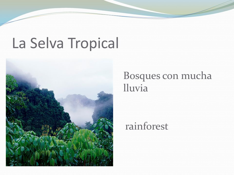 La Selva Tropical Bosques con mucha lluvia rainforest