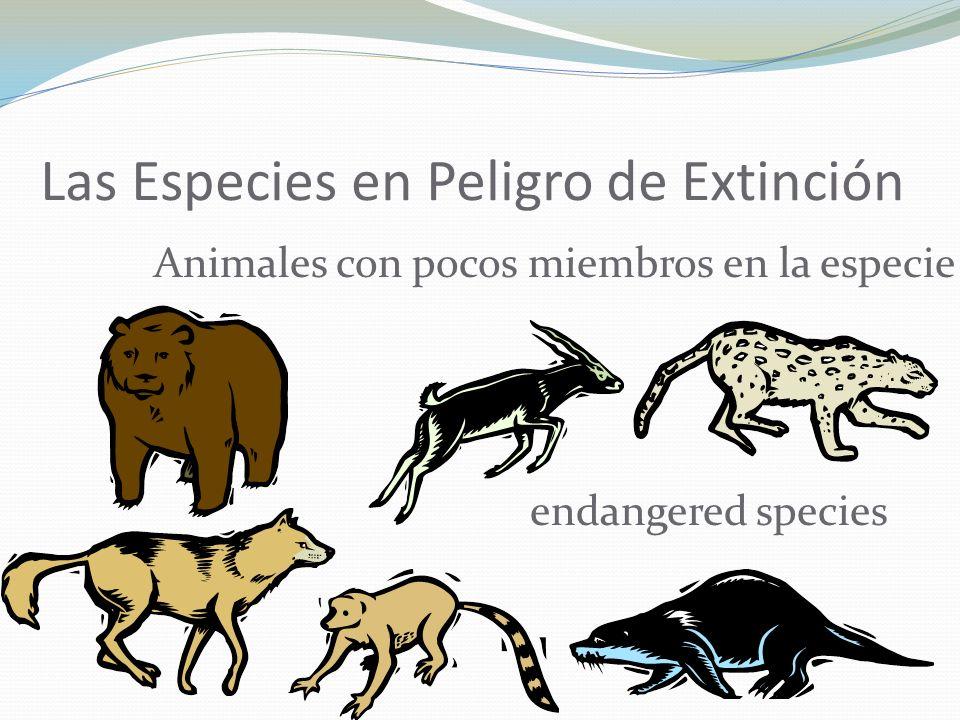 Las Especies en Peligro de Extinción