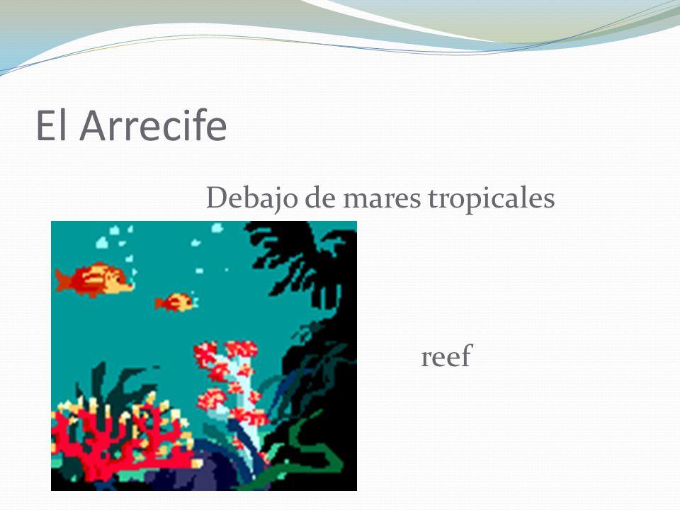 El Arrecife Debajo de mares tropicales reef