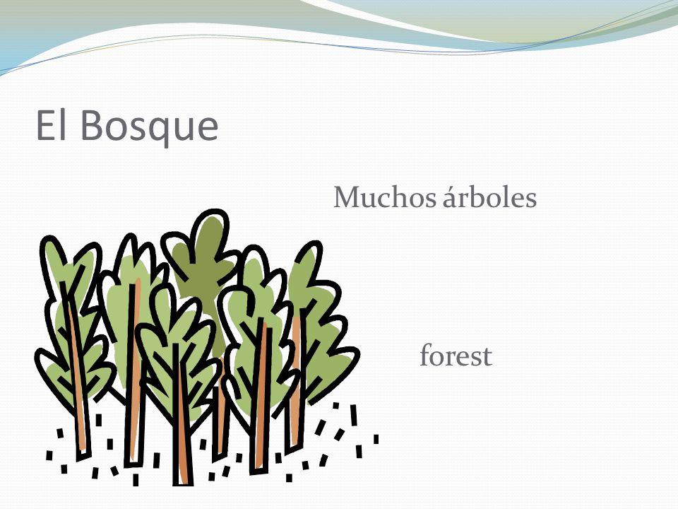 El Bosque Muchos árboles forest