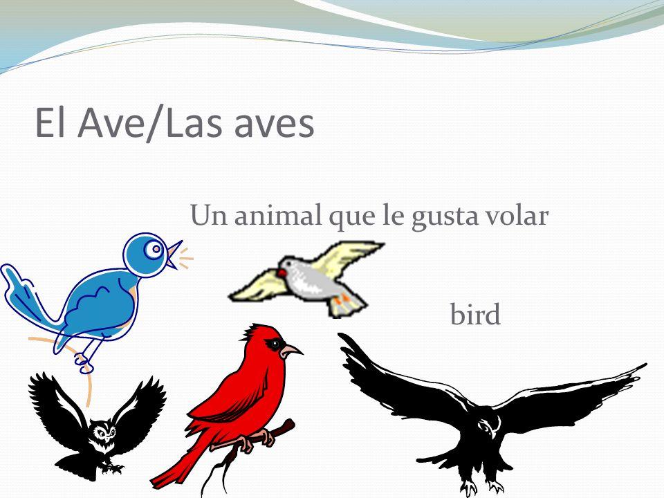 El Ave/Las aves Un animal que le gusta volar bird