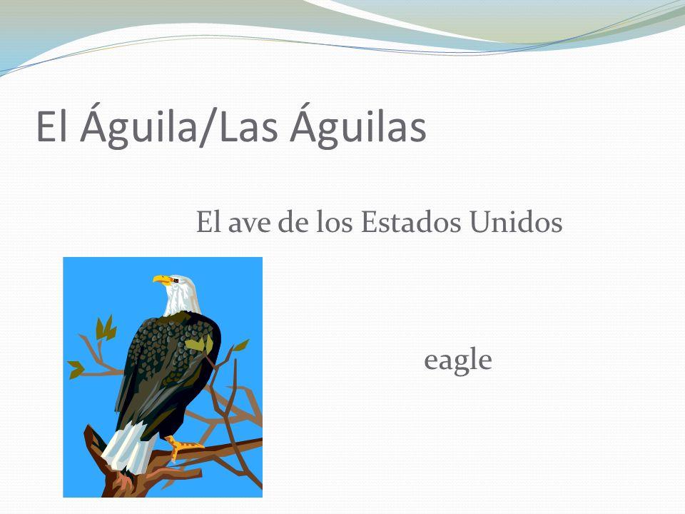El Águila/Las Águilas El ave de los Estados Unidos eagle