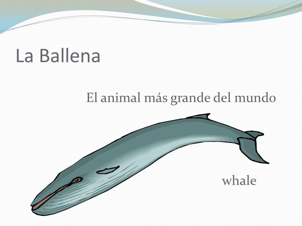La Ballena El animal más grande del mundo whale