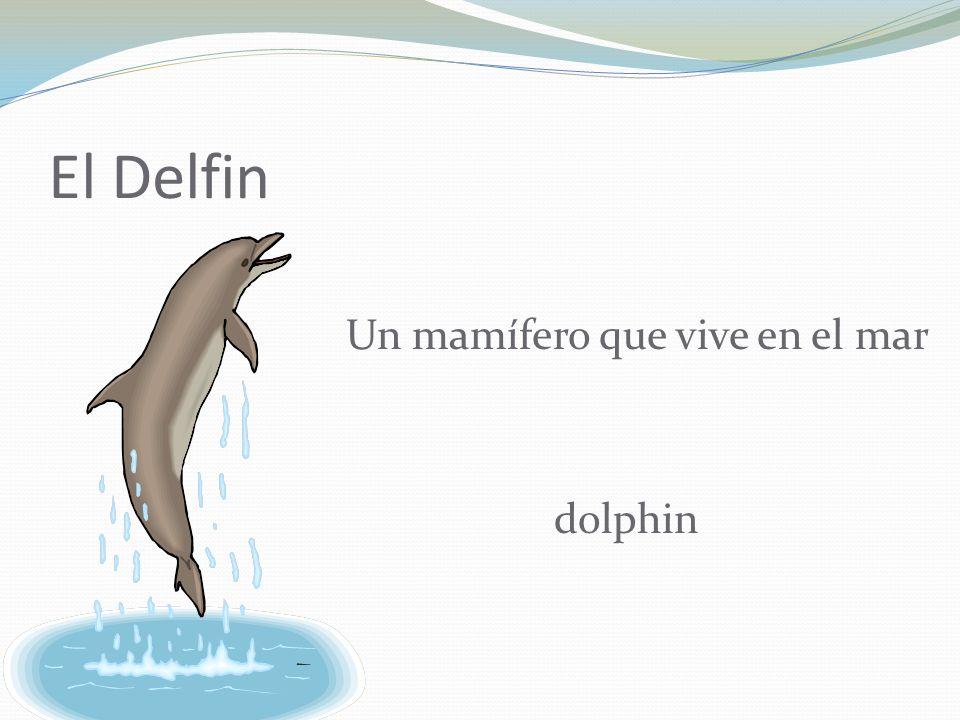 El Delfin Un mamífero que vive en el mar dolphin