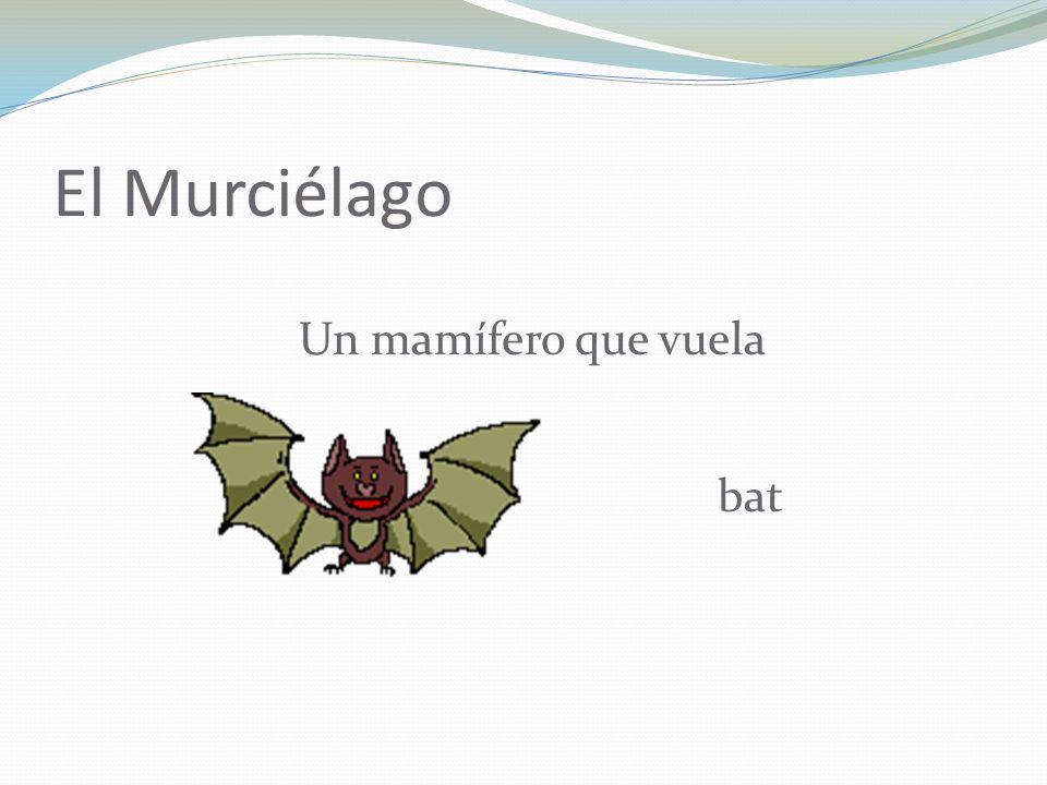 El Murciélago Un mamífero que vuela bat
