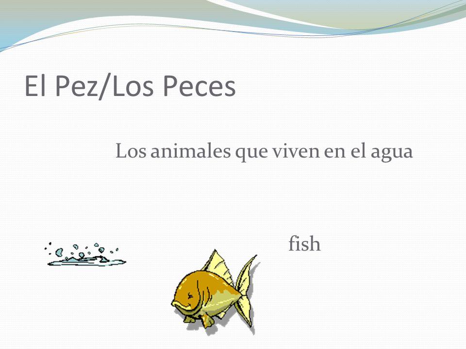 El Pez/Los Peces Los animales que viven en el agua fish