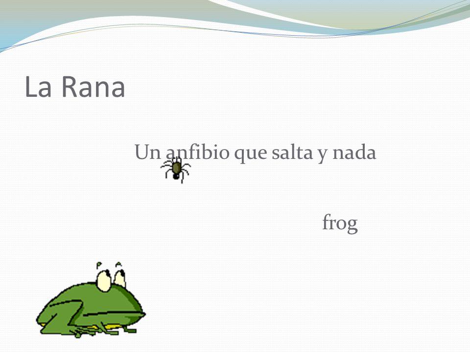 La Rana Un anfibio que salta y nada frog