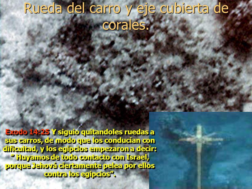 Rueda del carro y eje cubierta de corales.