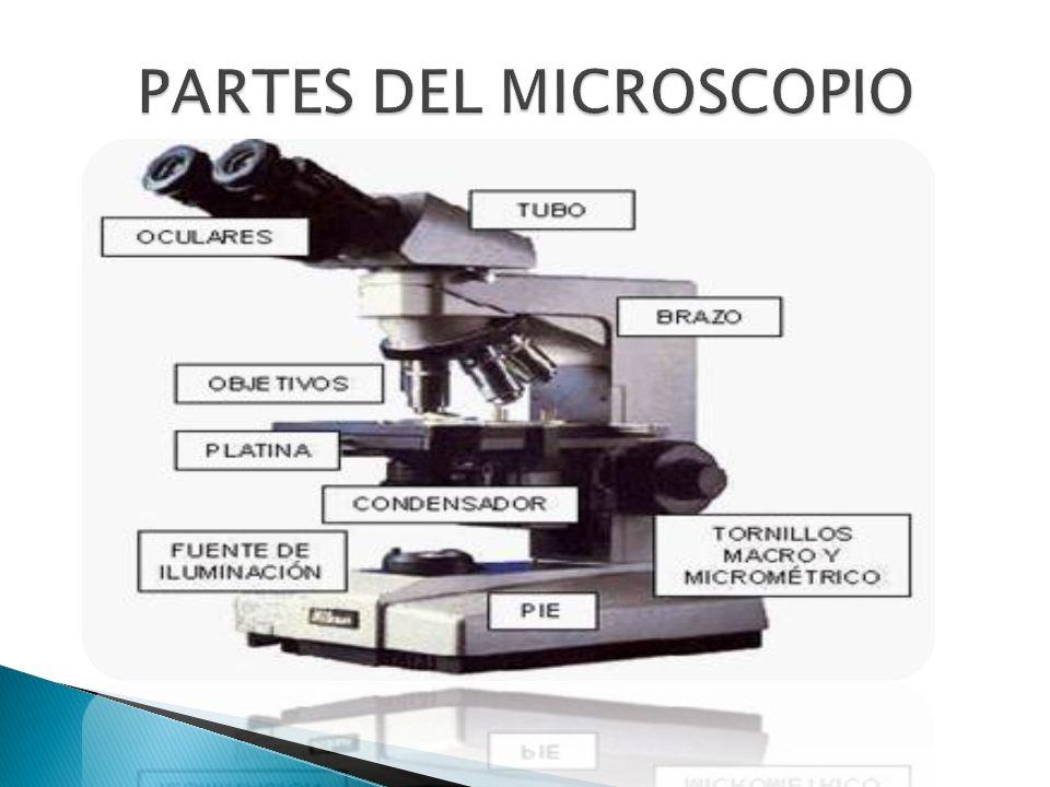 PARTES DEL MICROSCOPIO