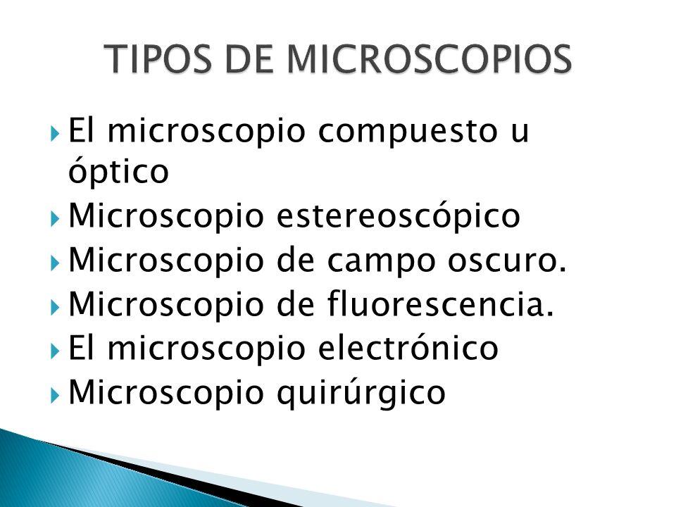 TIPOS DE MICROSCOPIOS El microscopio compuesto u óptico