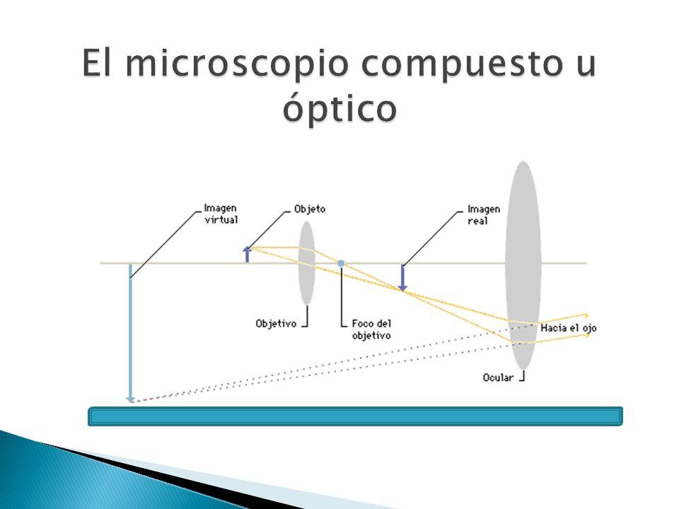 El microscopio compuesto u óptico
