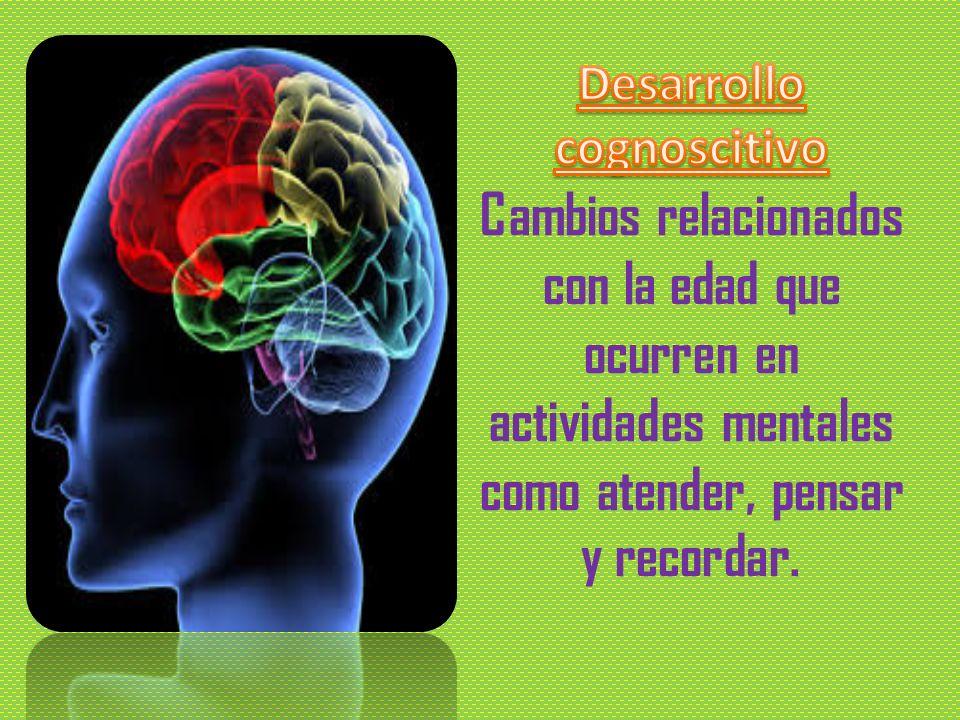 Desarrollo cognoscitivo Cambios relacionados con la edad que ocurren en actividades mentales como atender, pensar y recordar.