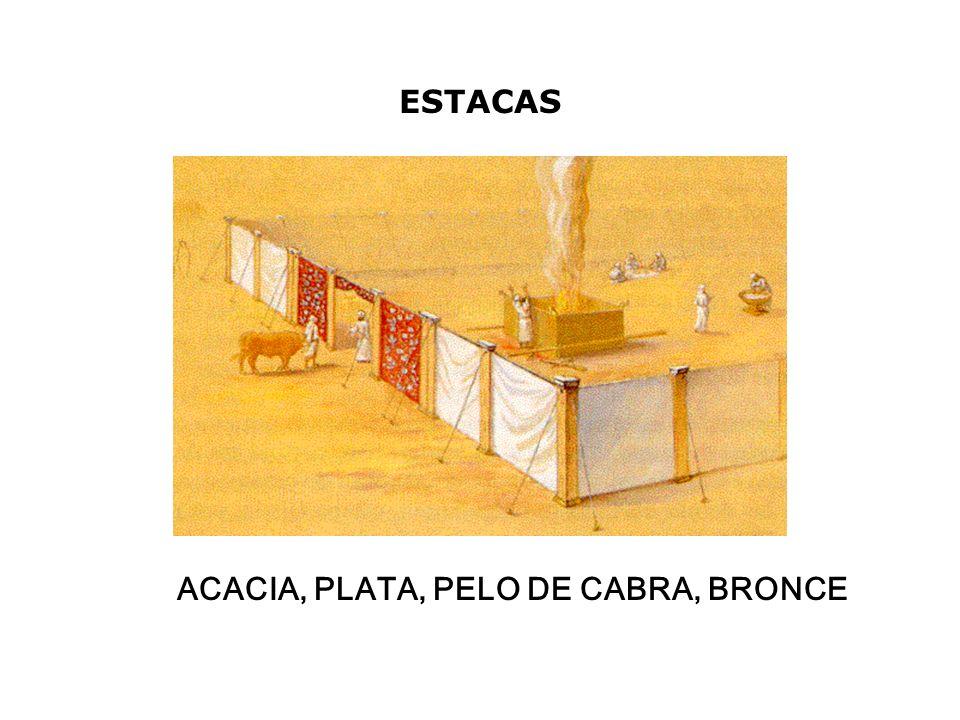 ACACIA, PLATA, PELO DE CABRA, BRONCE