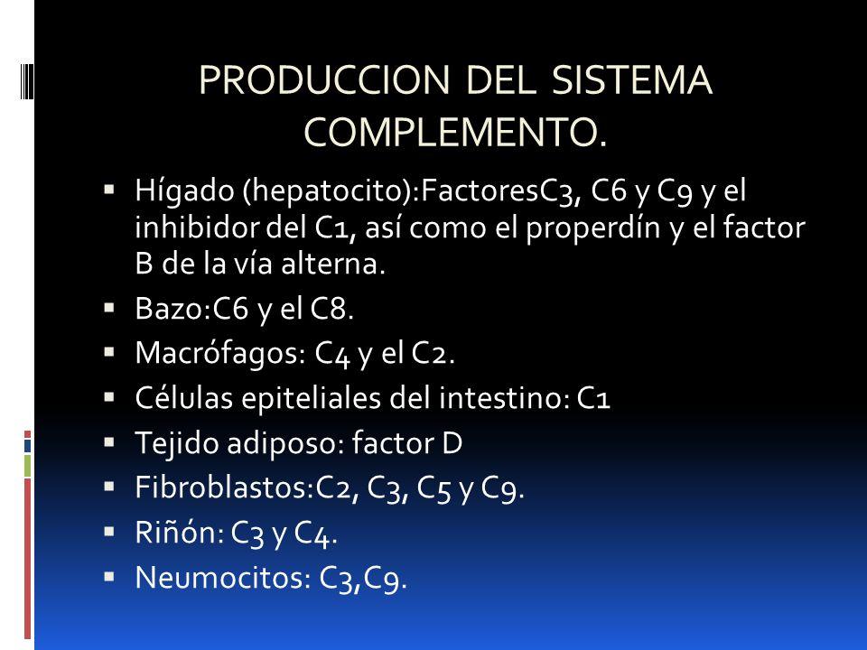 PRODUCCION DEL SISTEMA COMPLEMENTO.