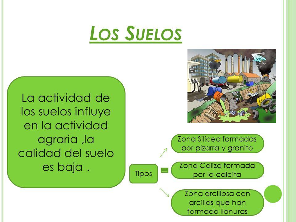 Los Suelos La actividad de los suelos influye en la actividad agraria ,la calidad del suelo es baja .