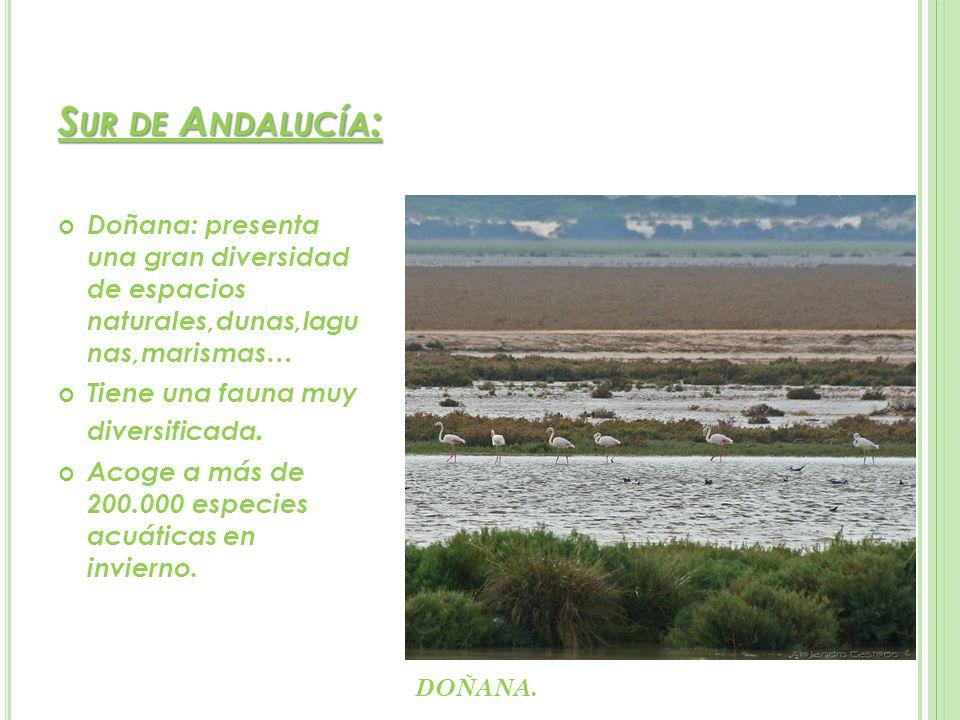 Sur de Andalucía: Doñana: presenta una gran diversidad de espacios naturales,dunas,lagu nas,marismas…