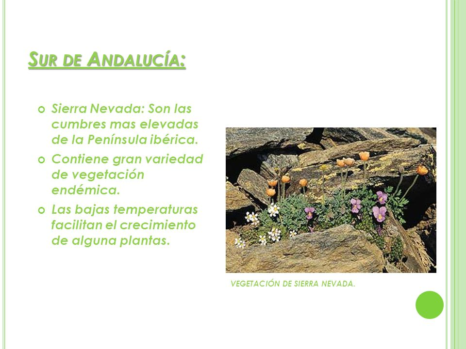 Sur de Andalucía:Sierra Nevada: Son las cumbres mas elevadas de la Península ibérica. Contiene gran variedad de vegetación endémica.