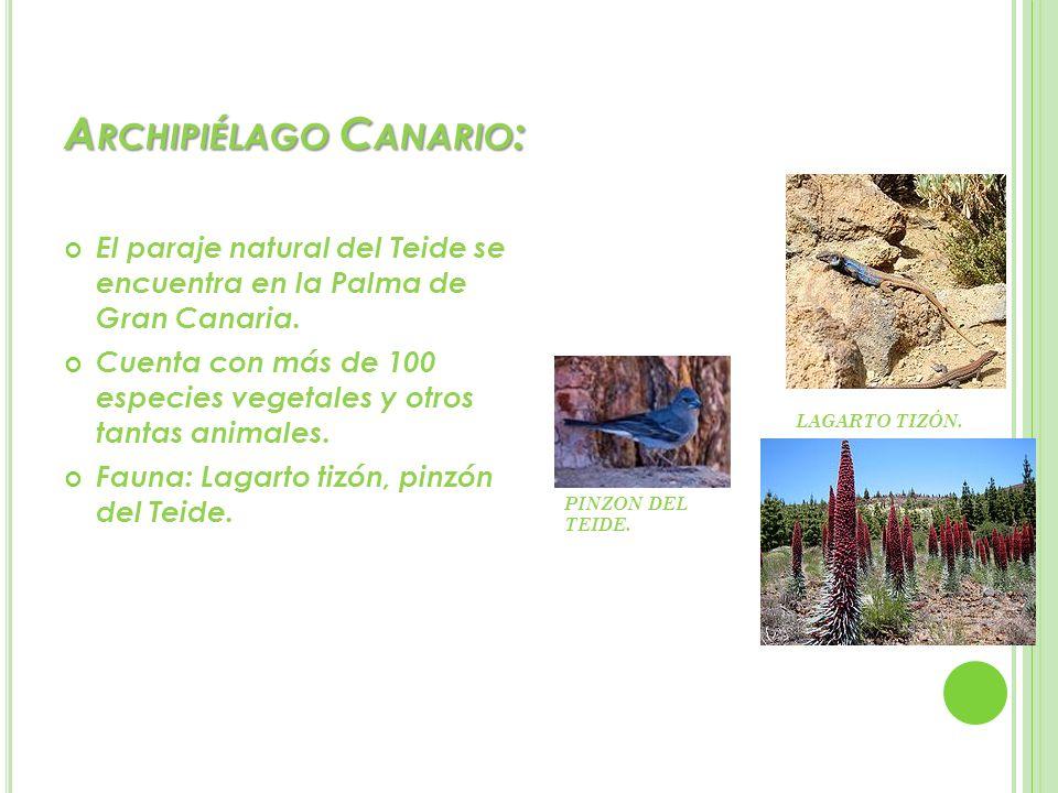Archipiélago Canario: