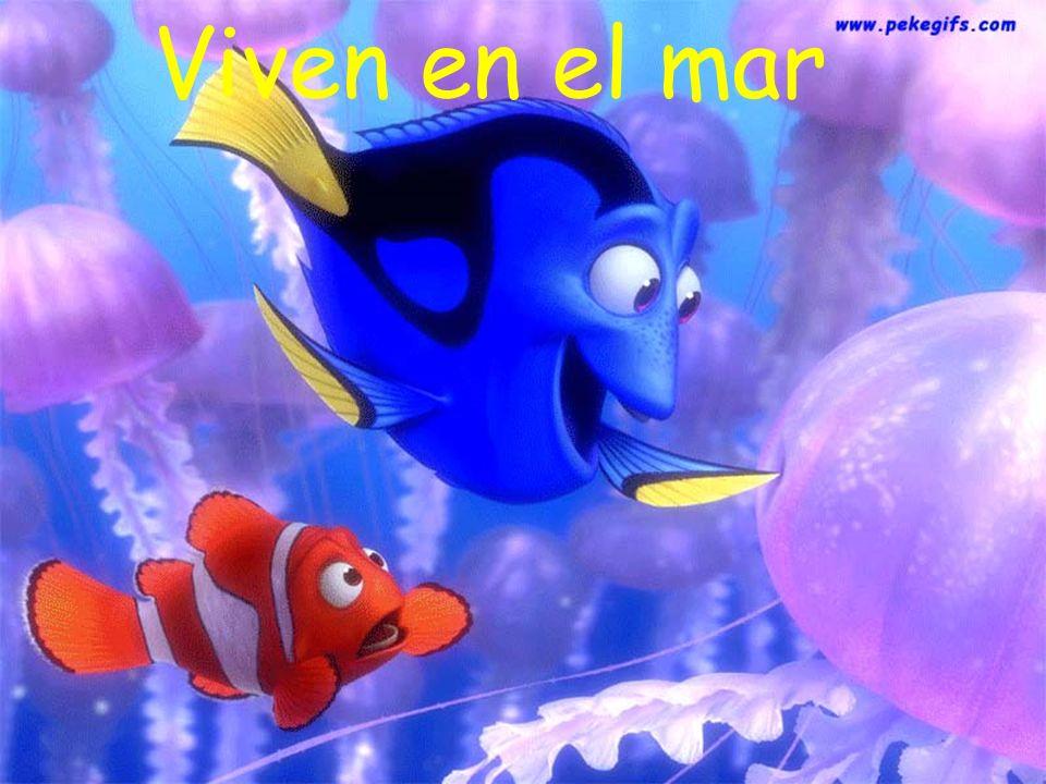 Viven en el mar