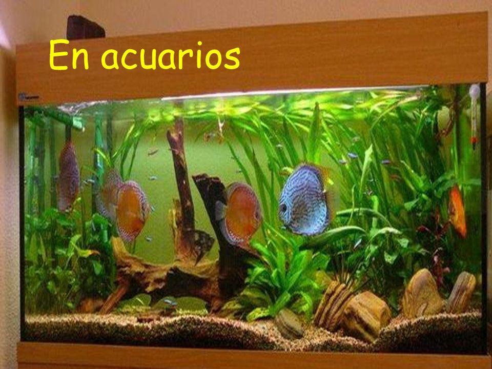En acuarios
