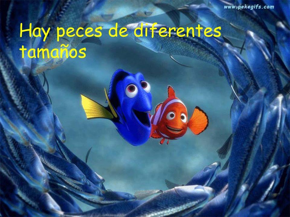 Hay peces de diferentes tamaños