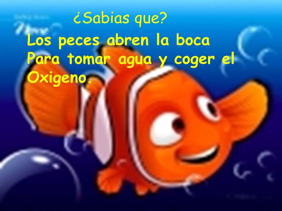 ¿Sabias que Los peces abren la boca Para tomar agua y coger el Oxigeno.