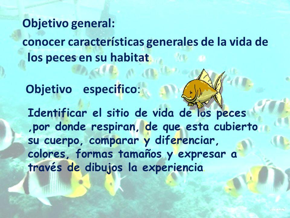 Objetivo general: conocer características generales de la vida de los peces en su habitat