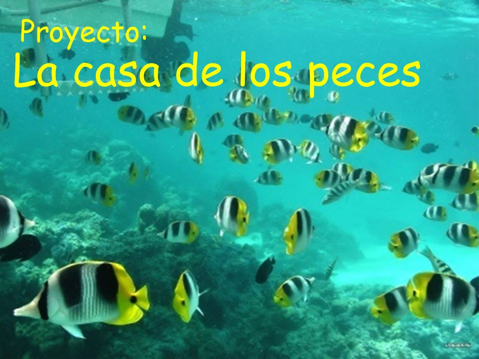 Proyecto: La casa de los peces