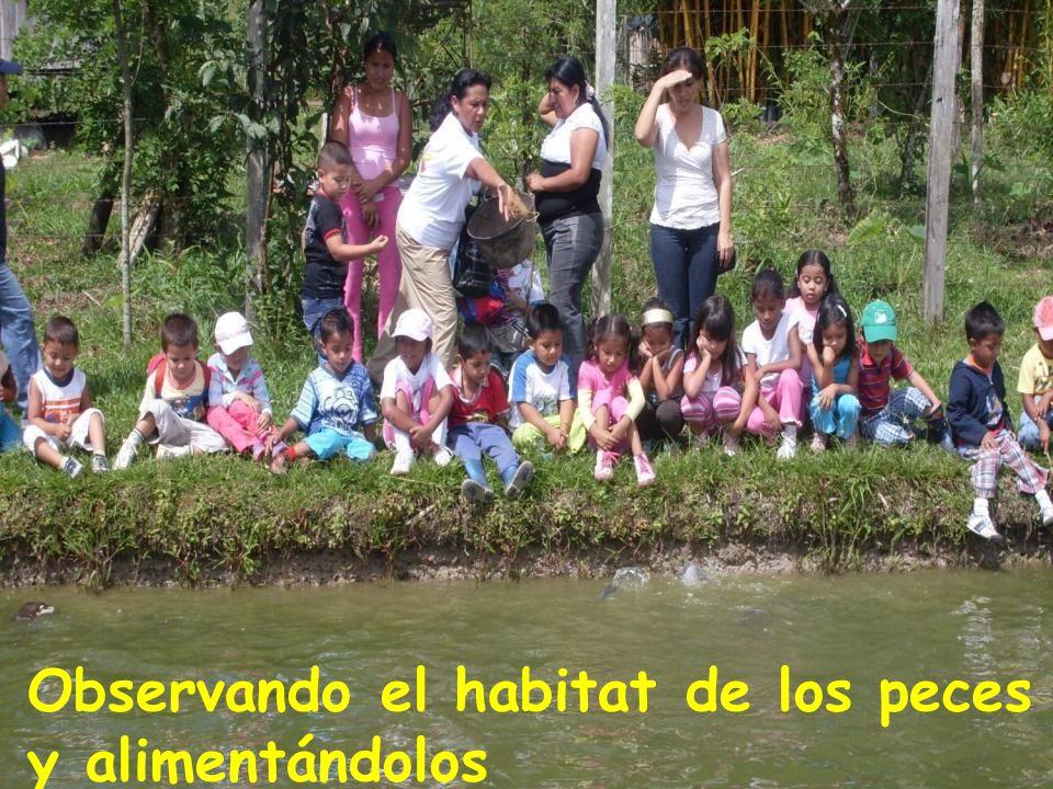 Observando el habitat de los peces y alimentándolos