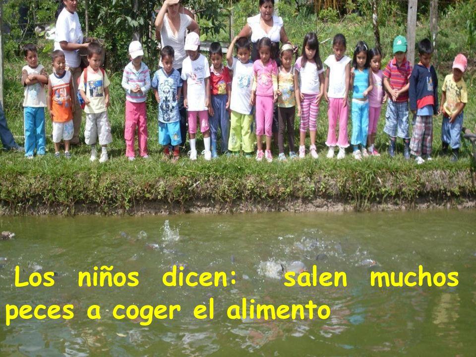 Los niños dicen: salen muchos peces a coger el alimento