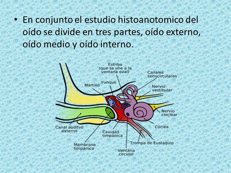 En conjunto el estudio histoanotomico del oído se divide en tres partes, oído externo, oído medio y oído interno.