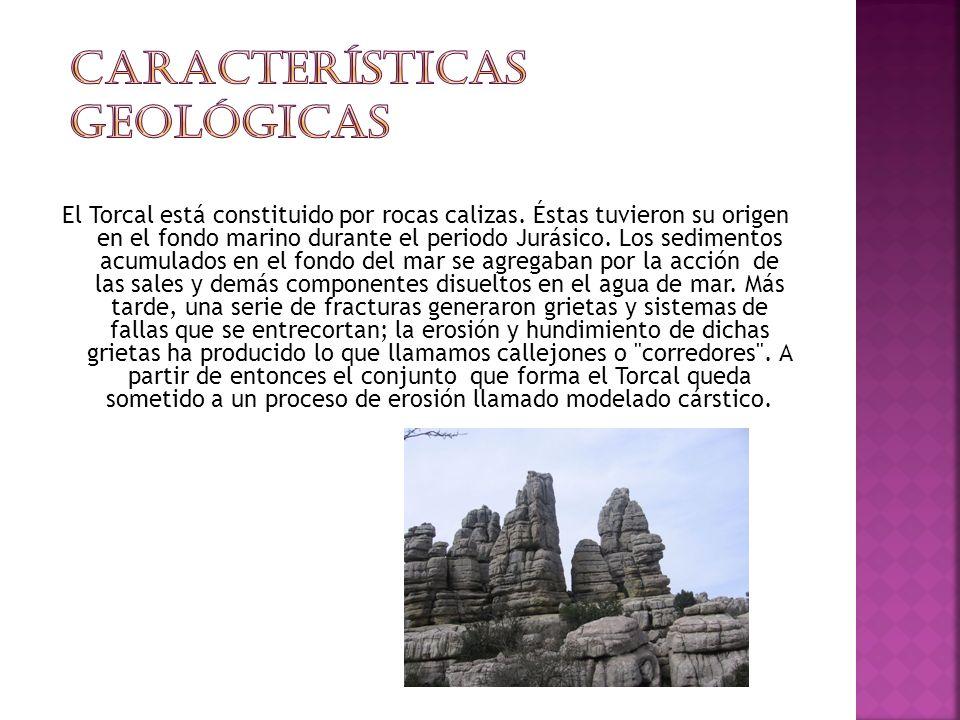 Características Geológicas