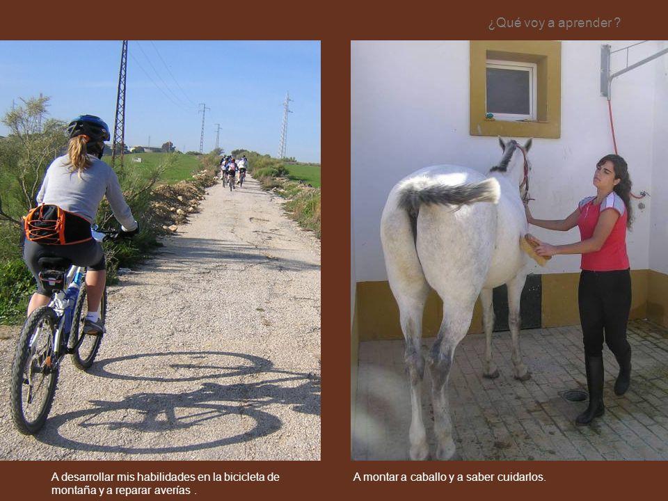 ¿Qué voy a aprender CONTENIDO. Opción 4. Dos fotografías.