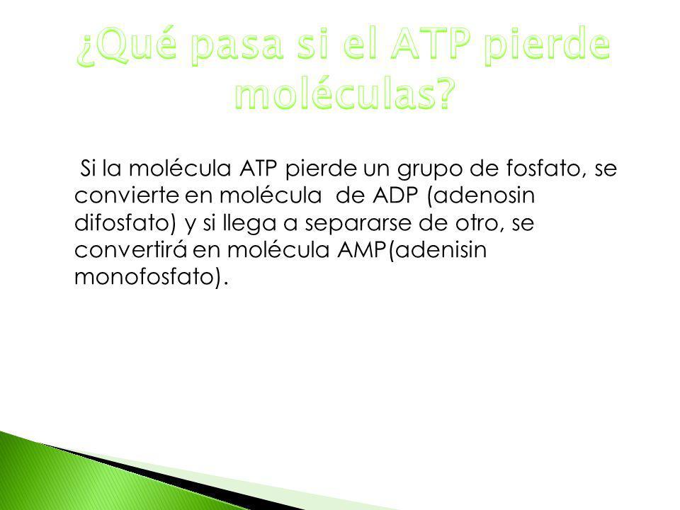 ¿Qué pasa si el ATP pierde moléculas