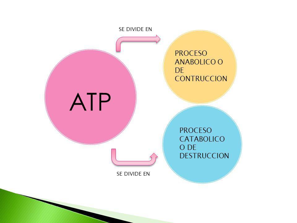ATP PROCESO ANABOLICO O DE CONTRUCCION