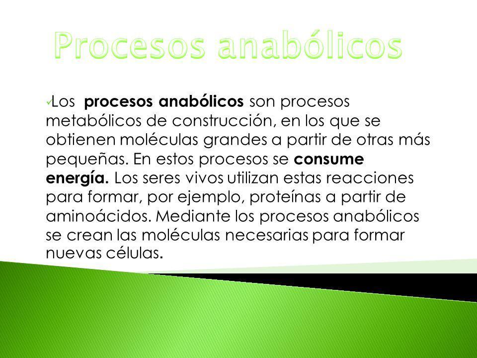 Procesos anabólicos